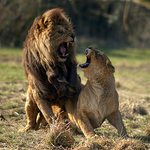 Lion King Musical Aanbieding