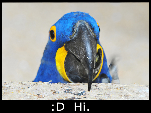 The teach Zone: Worlds Funniest Bird Picture with Caption
