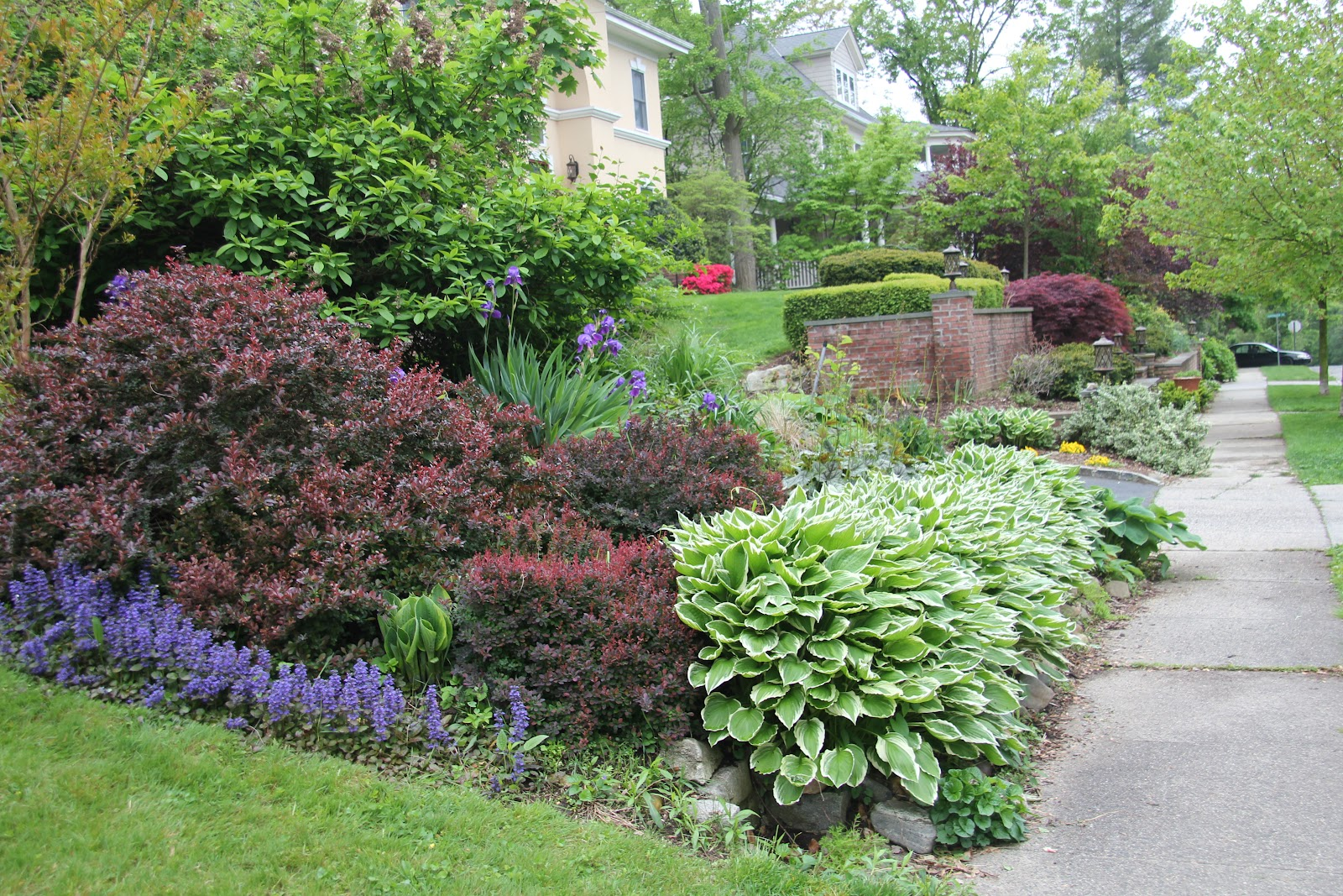 Gardening and Gardens: What's Blooming: May