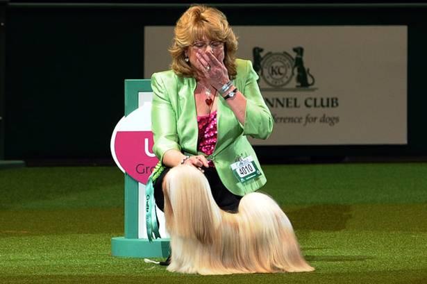 Best Of Westminster Dog Show Fail