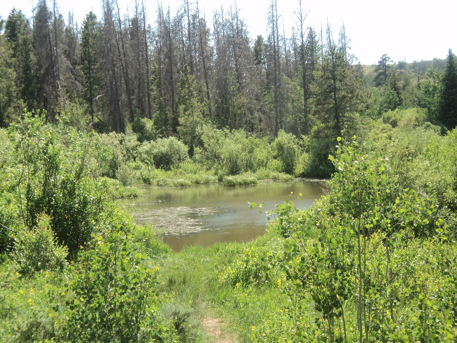 Mathprofhiker 39 s hiking blog medicine bow national forest for Small pond base