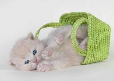 gatito canasta