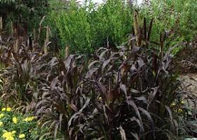 Mark Cullen Garden Guru Ornamental Grasses