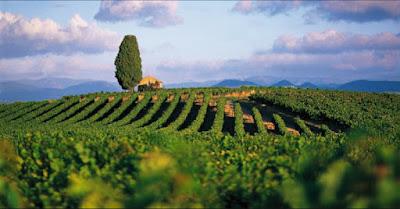 Blog vin Beaux-Vins région Languedoc-Roussillon viticole