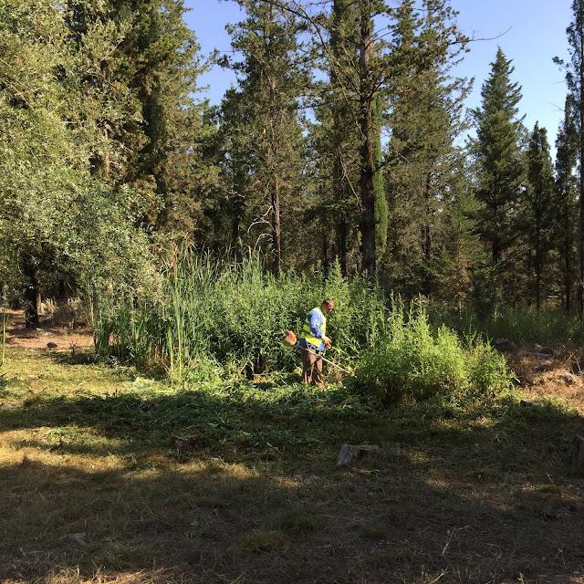 Άρτα: Καθαρισμοί Οικοπέδων, Δράσεις Αντιπυρικής Προστασίας Και Αποψίλωση Περιαστικού Δάσους Από Το Δήμο Αρταίων