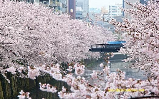 Central Region of Tokyo (Minato)