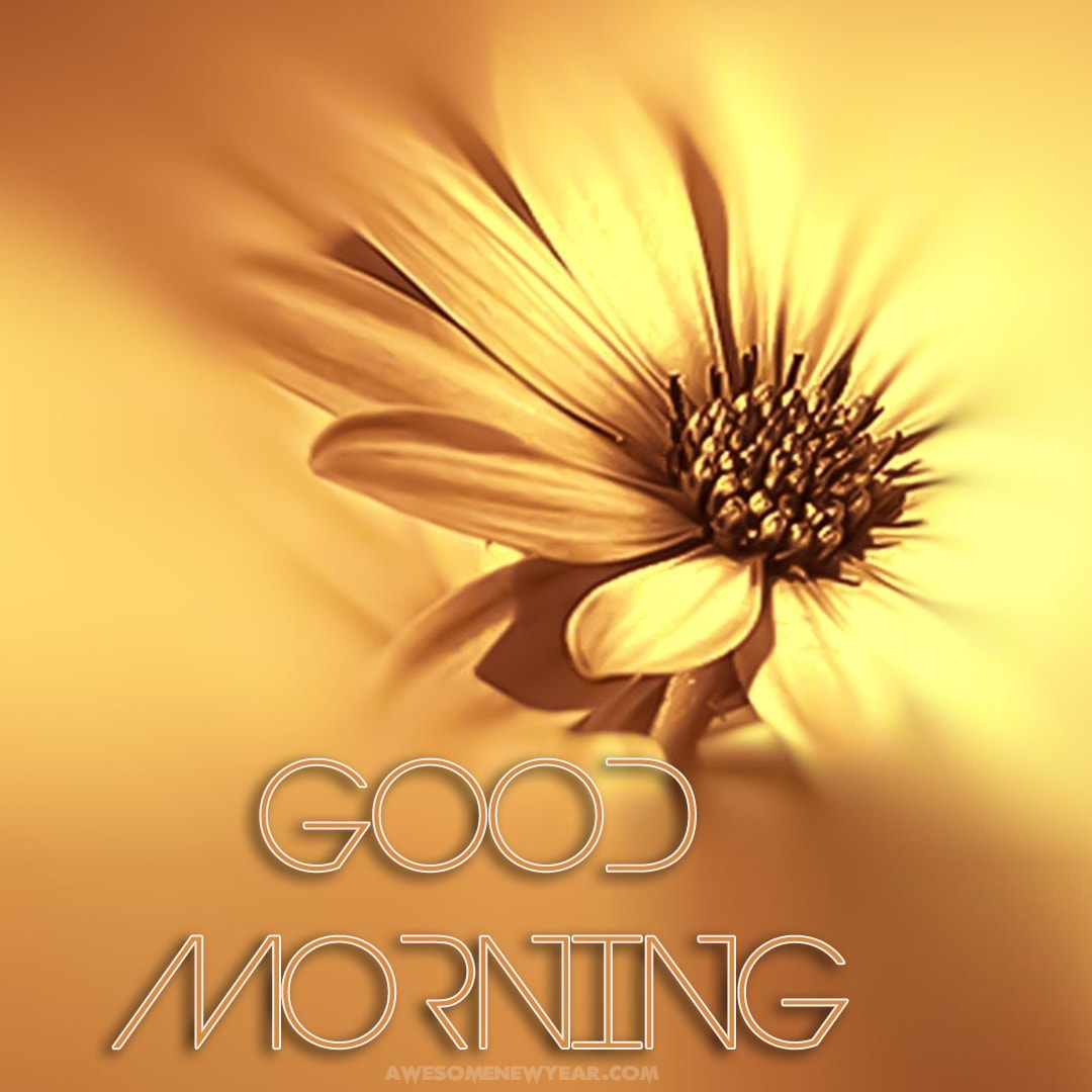 Gud Morning Images