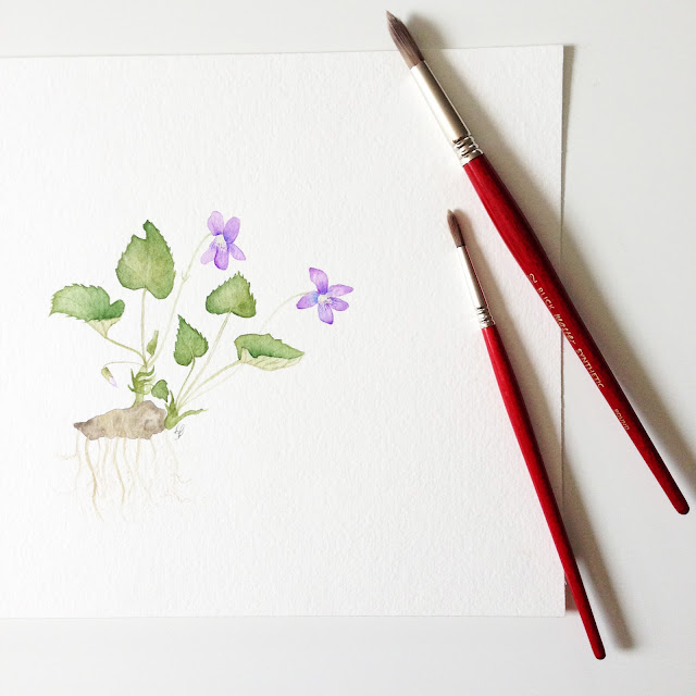 violets, wild violets, wood violets, watercolor violets, botanical watercolor, Anne Butera, My Giant Strawberry