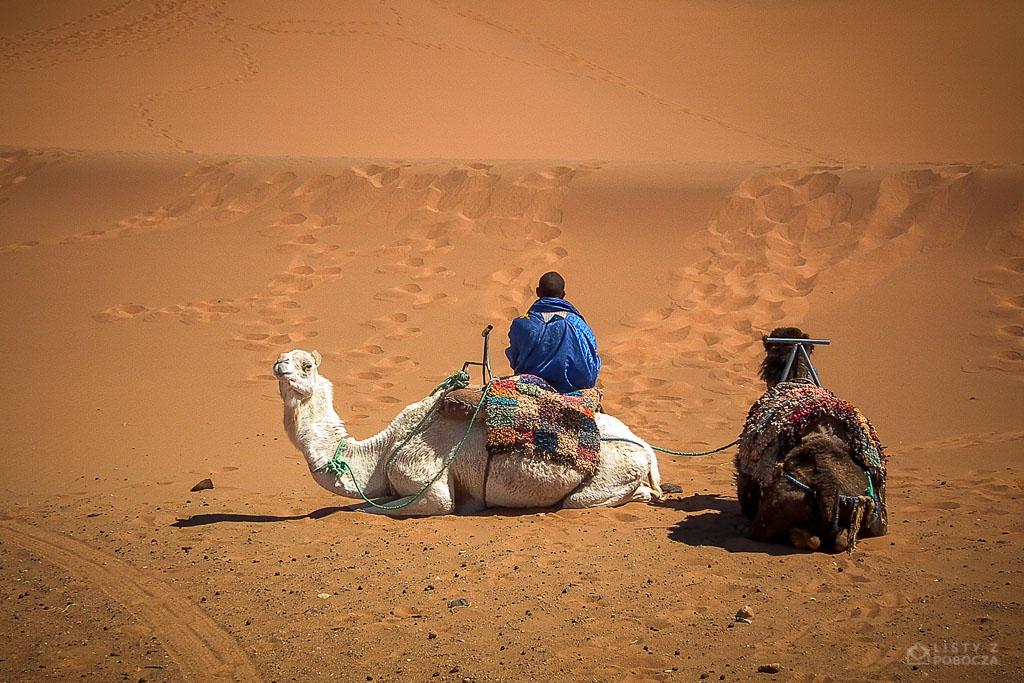 wielbłądy sahara maroko listy z pobocza