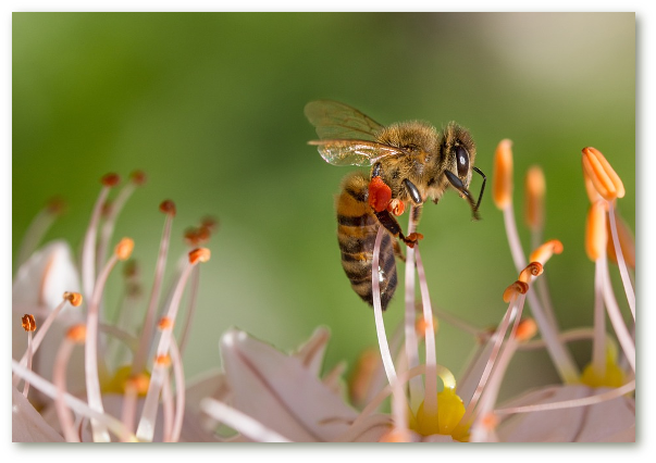 Informatii despre beneficiile mierii crude pure, propolisului, laptisorului de matca si polenului crud