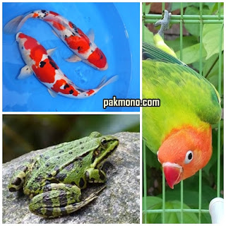 Penggolongan hewan dan contoh soalnya