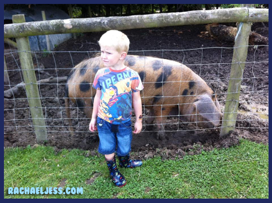 Visiting the pigs outside at Middle Farm