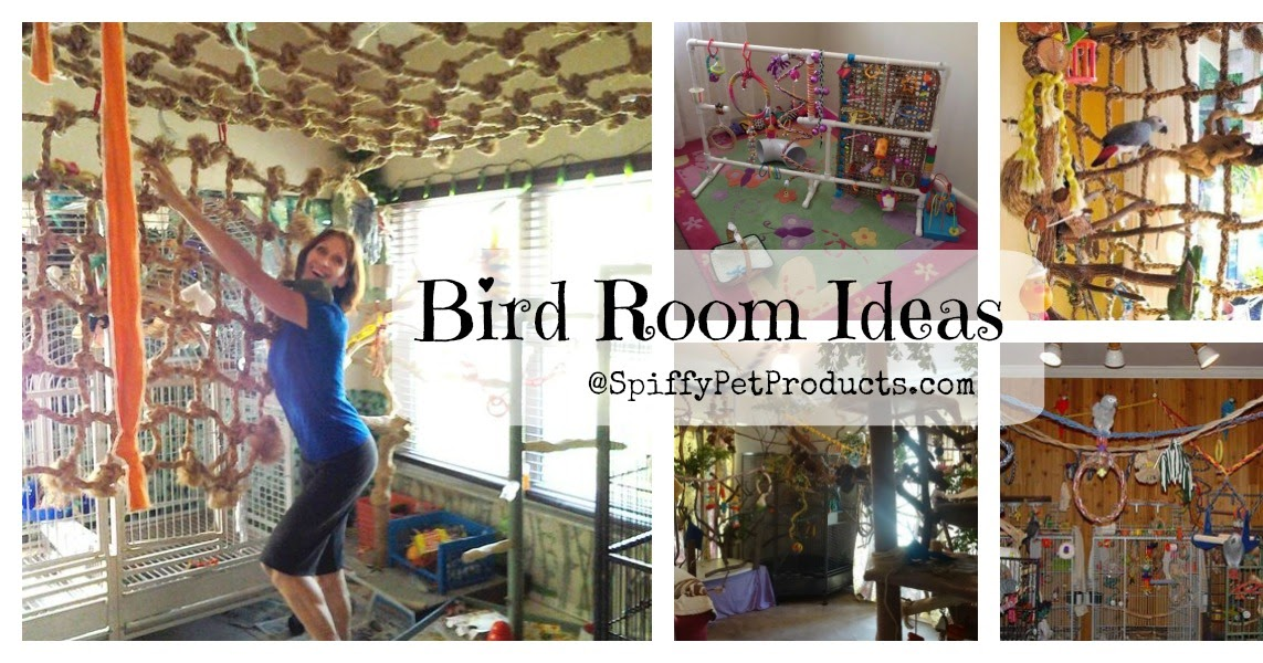 Spiffy Pet Products Bird Room Ideas Are Addictive You