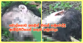 When head is found near Bolgoda ...  a trunk of body found from Elpitiya!
