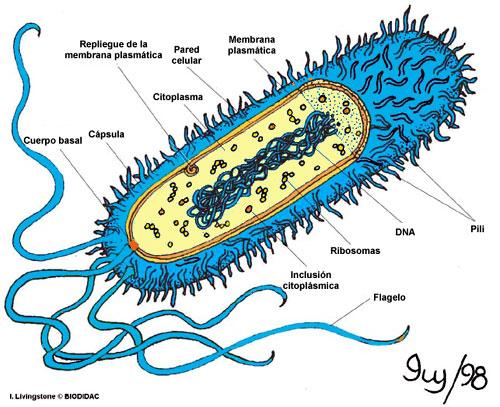 La Magia De Los OVNIS: Arqueobacterias