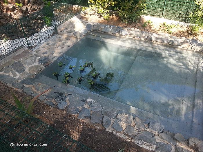 Un zoo en casa construcci n de un estanque de hormig n for Estanque construccion