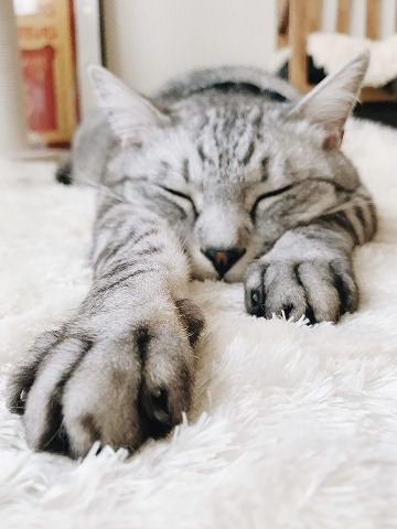 前足を伸ばして寝そべっているサバトラ猫