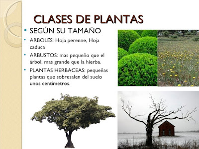El blog de quinto tema 2 conocemos el mundo de las for Arboles para jardin de hoja perenne