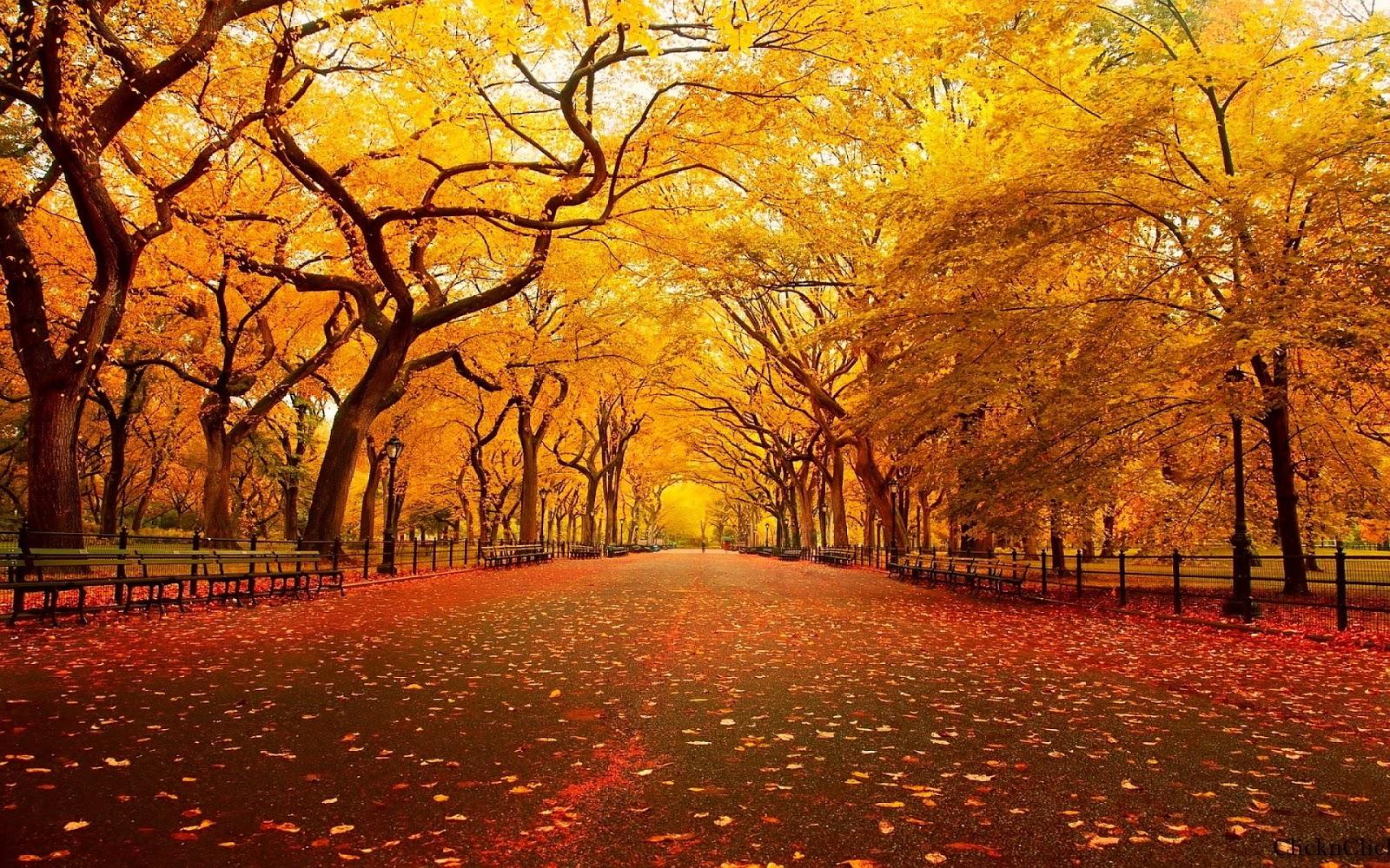 30 Wallpaper Autumn Keren Dan Cantik Terbaru Bangiz