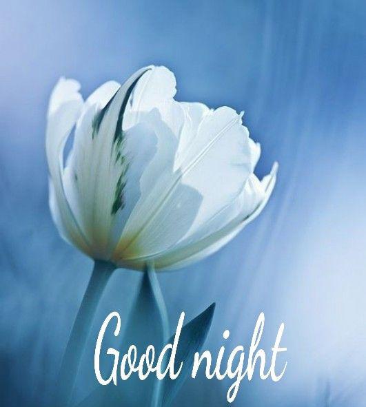 A Beautiful Good Night White Flower