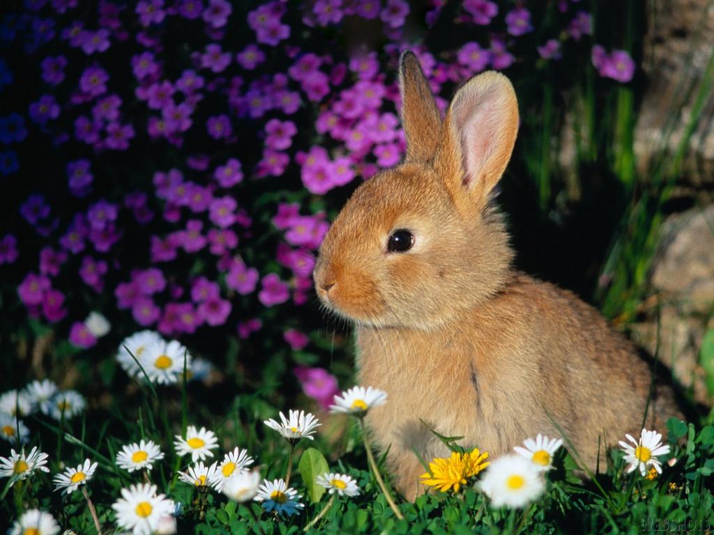 happy easter bunnies flowers - photo #26