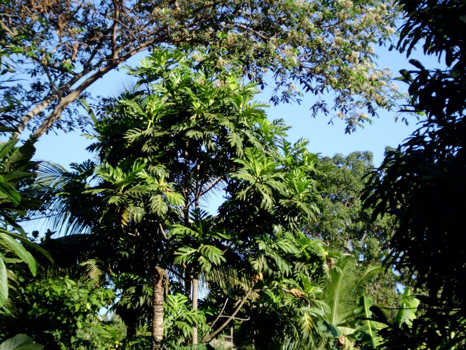 Vegetação de Colorado do Oeste | Rondônia