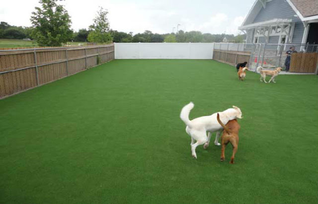Reasons behind the increasing Popularity of Pet Friendly Artificial Turf
