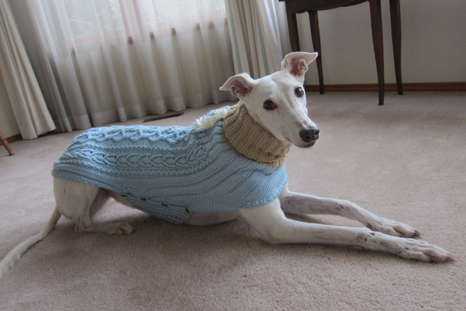 Knitting Patterns For Greyhound Dogs : Greyhound Knit Sweaters: Baby blue sweater for a girl dog