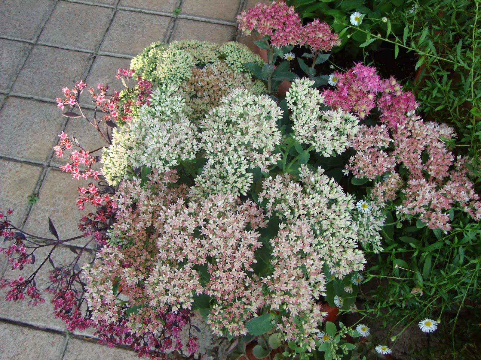 Aiuole fiorite tutto l anno aiuole fiorite fai da te for Piante da balcone tutto l anno