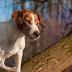 10+1 důvod, proč nepouštět na volno psa bez přivolání