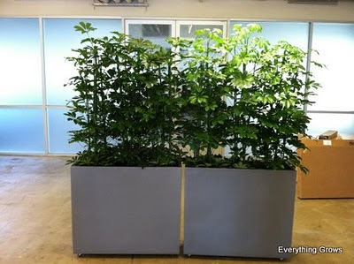 everything grows: rolling plant wall room dividers