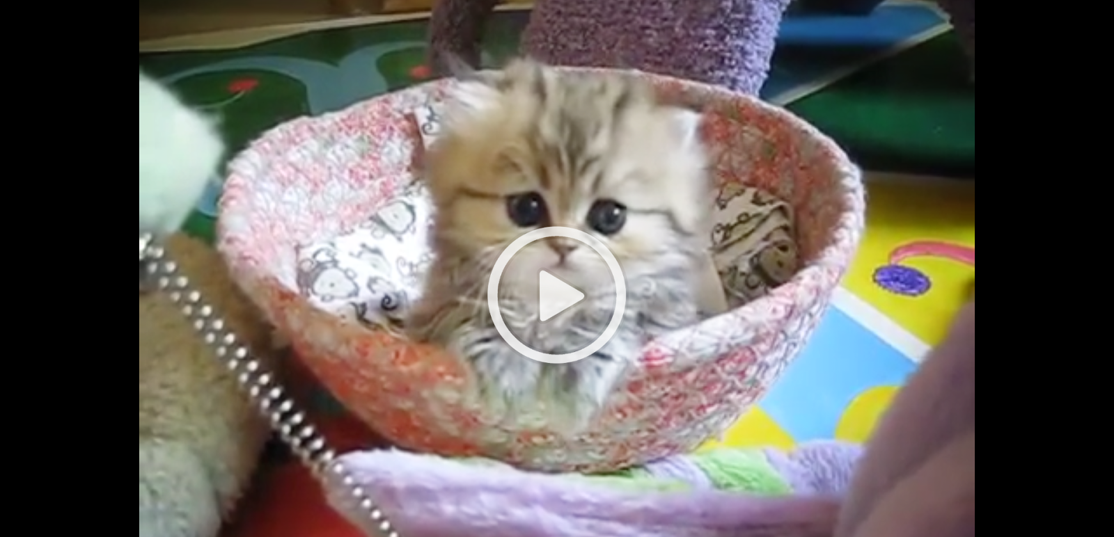 Cat Videos India, The Most Innocent Kitten In The World-3019
