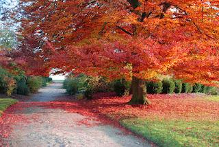 jesień, owoce, warzywa, co jeść jesienią, zakupy na jesień