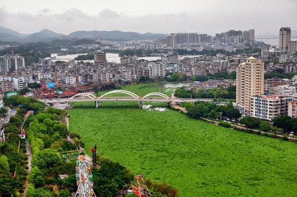 River in China Turns Into A Bizarre Green Carpet Of Leaves