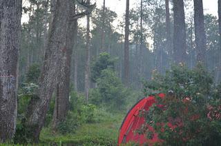 Wisata Semarang : Base Camp Mawar Bandungan tempat Camp Indah