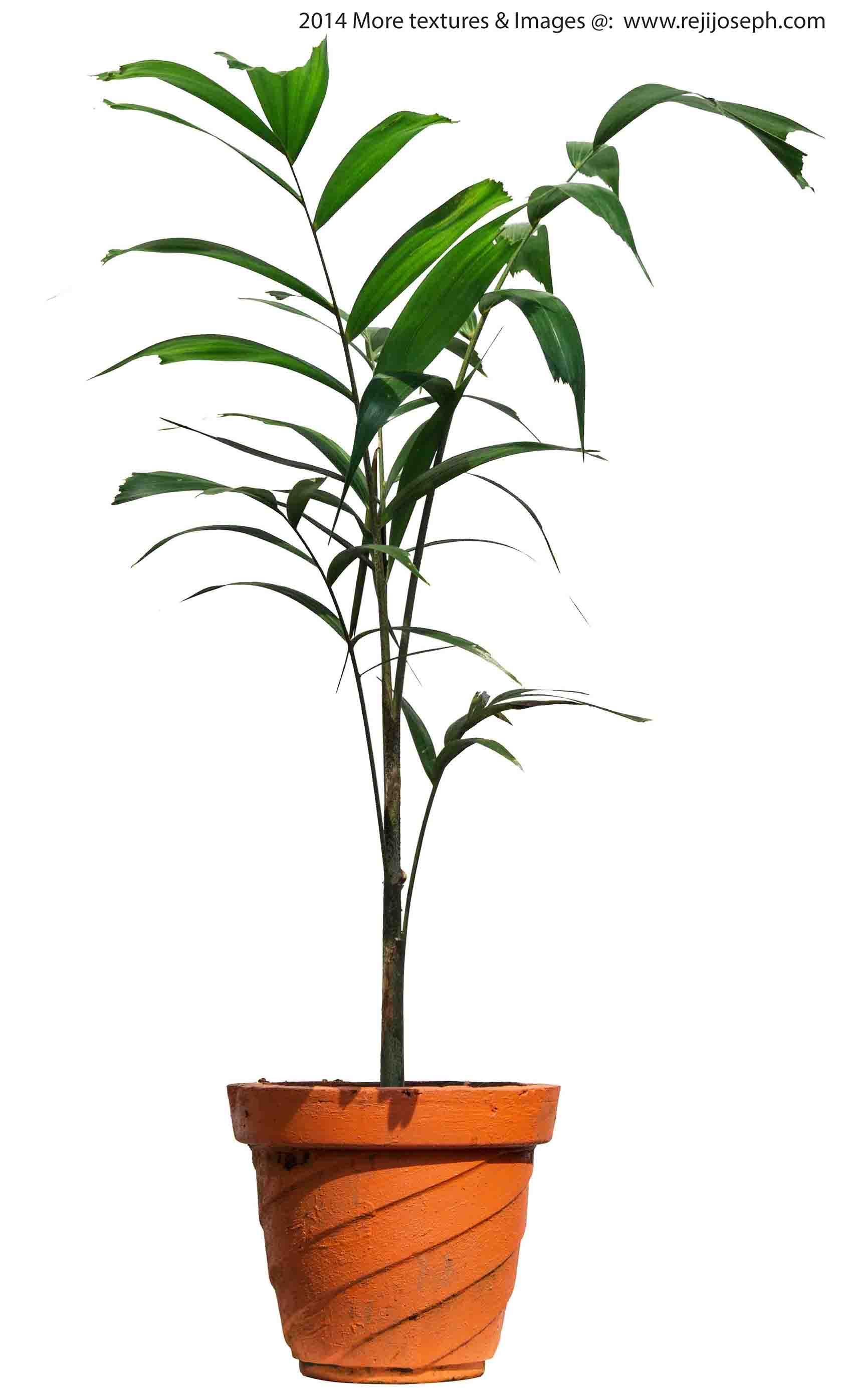 Ground Rattan Garden Plant Texture 00004