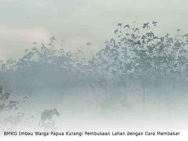 BMKG Imbau Warga Papua Kurangi Pembukaan Lahan dengan Cara Membakar