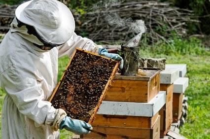 Δράσεις για αντικατάσταση κυψελών και μετακινήσεις μελισσοσμηνών στην Αργολίδα