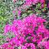القواعد الاساسية لتنسيق الزهور