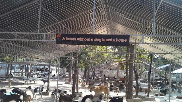 cani sotto una tettoia