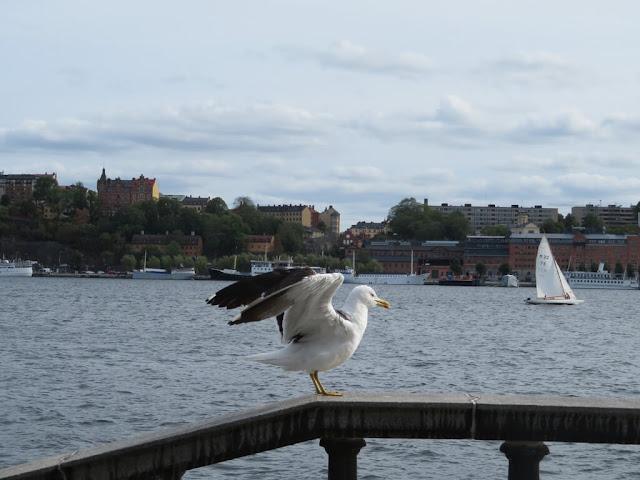 Aves na cidade de Estocolmo