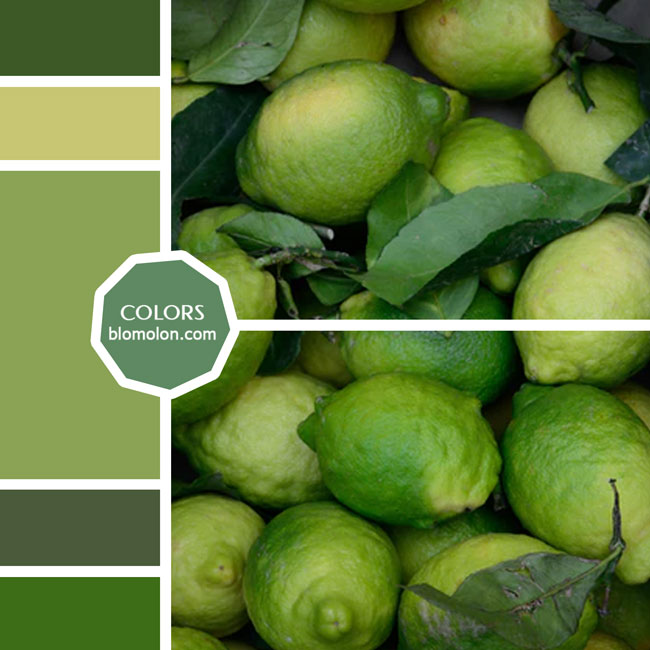 variedad_en_color_moodboard_39