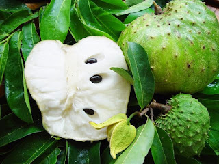 Benefits Of Soursop Leaves For Skin Hair And Health