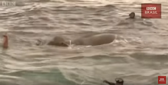 Elefante nadando mar - Img 1