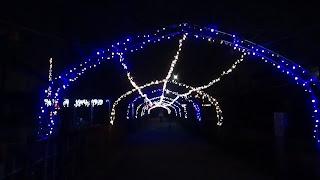 夜の生物園イルミネーション画像