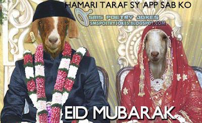 Eid Ul Adha Funny Texts Cards