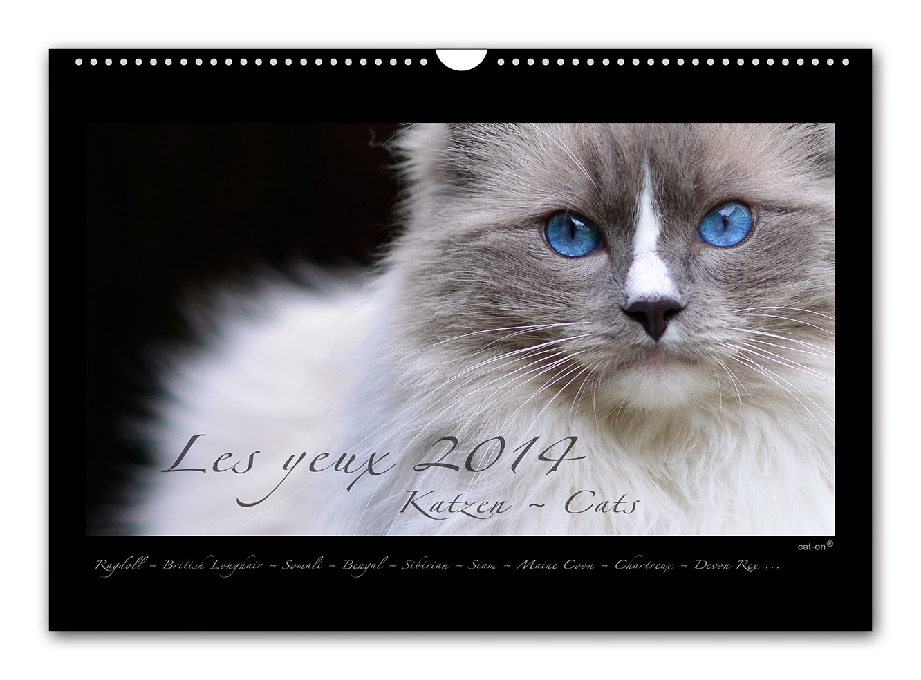 sch ne katzenkalender 2014 der cat on wandkalender. Black Bedroom Furniture Sets. Home Design Ideas