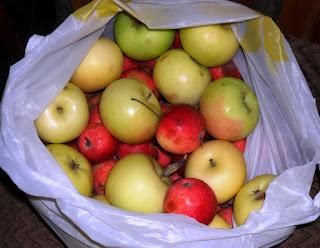 Яблочки, 29 августа