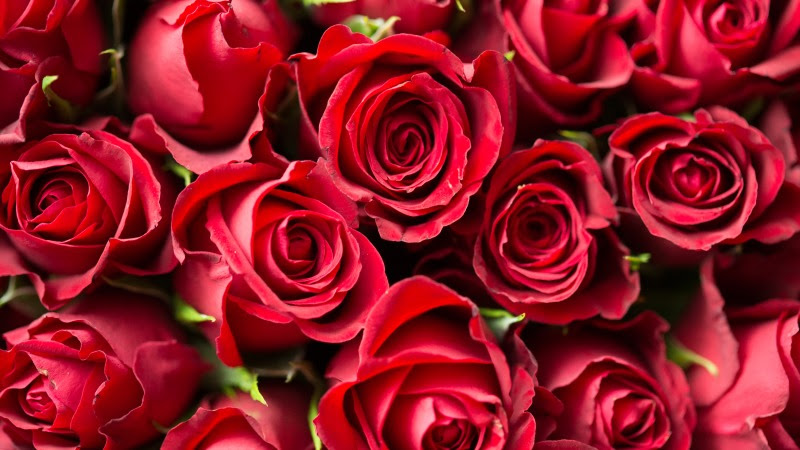 Big Red Roses Bouquet HD