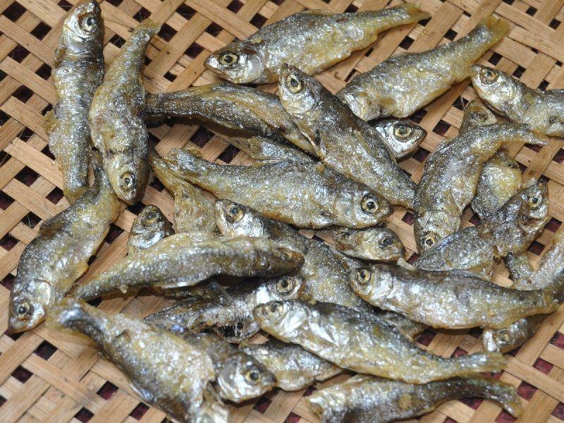 Gambar Ikan Bilis